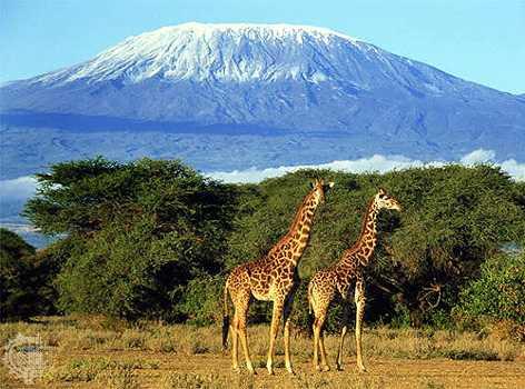 Basé sur l'ordre alphabétique, tout ce qui vous passe par la tête. - Page 37 Kilimanjaro